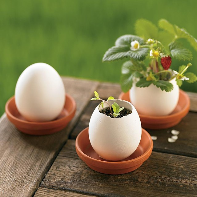 Creative Grow Herbs In Eggs
