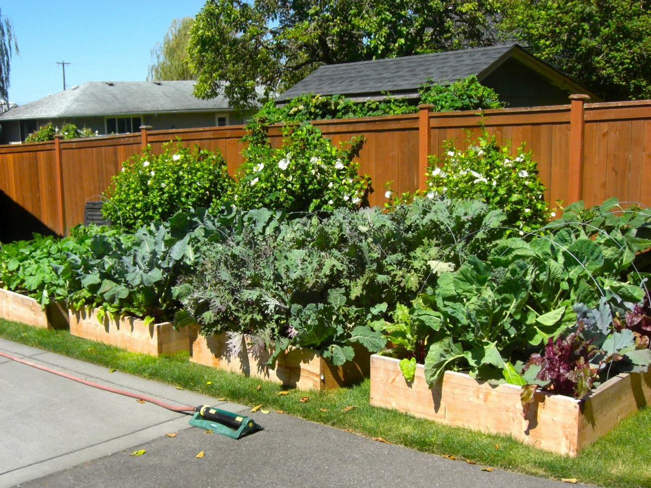 Fertilizing Vegetable Gardening In A Raised Bed