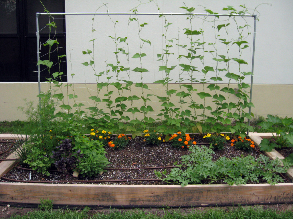 Permanent Marker Vegetable Gardening In A Raised Bed