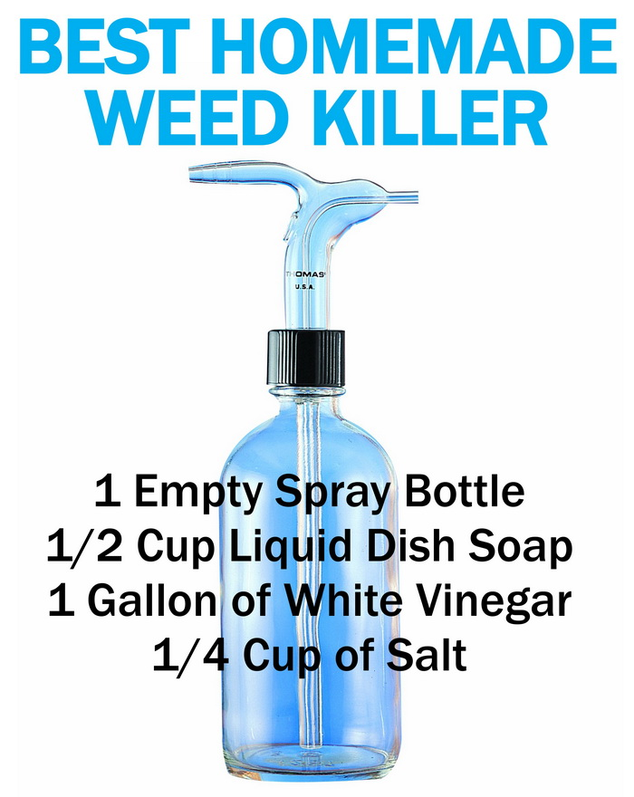 Simple Homemade Best Weed Killer for Lawns