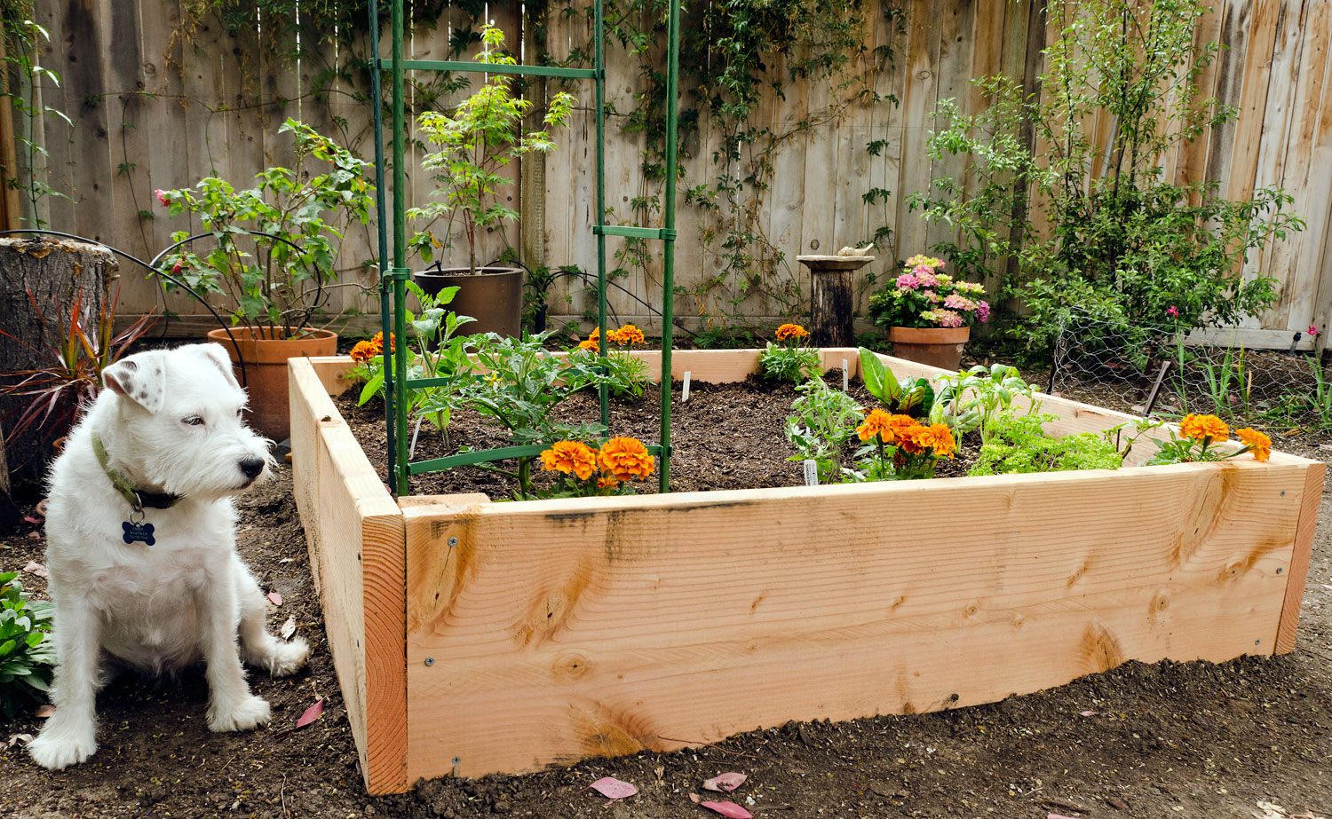 Types Vegetable Gardening In A Raised Bed (Image 9 Of 10)