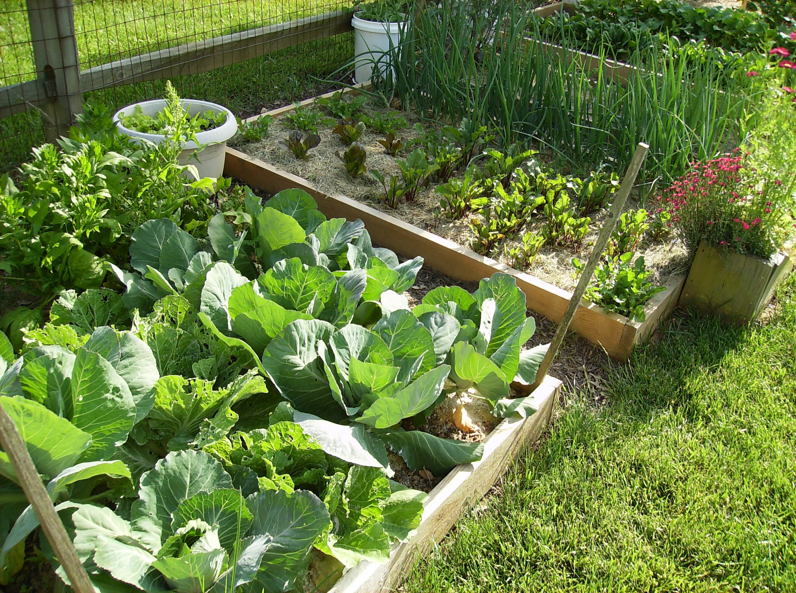 Watering Vegetable Gardening In A Raised Bed