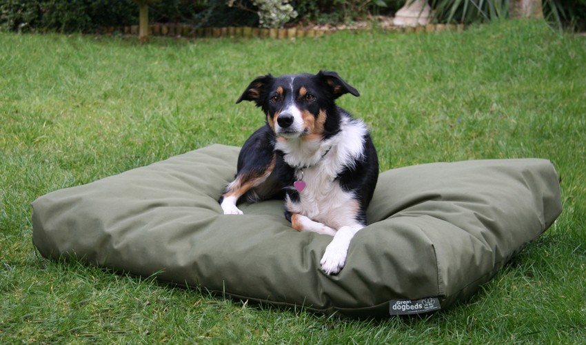 Natural Tips of How to Make a Dog Bed