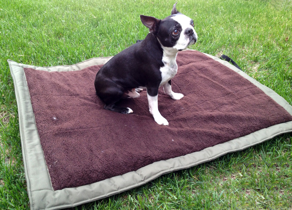 Simple Carpet Tips of How to Make a Dog Bed