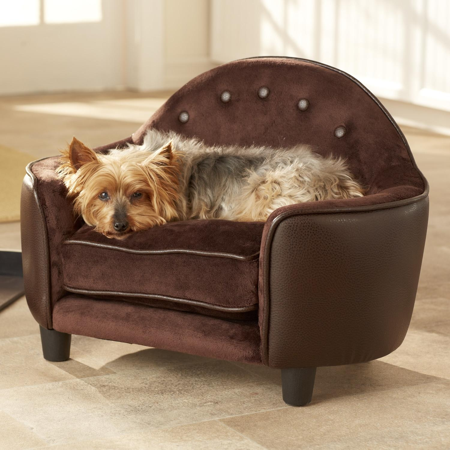 Dog Sofas And Chairs Uk – Hereo Sofa With Regard To Dog Sofas And Chairs (View 3 of 20)
