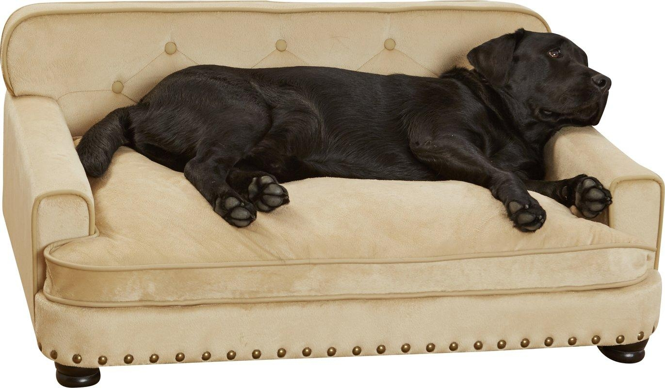 Enchanted Home Pet Library Dog Sofa & Reviews | Wayfair For Dog Sofas And Chairs (View 20 of 20)