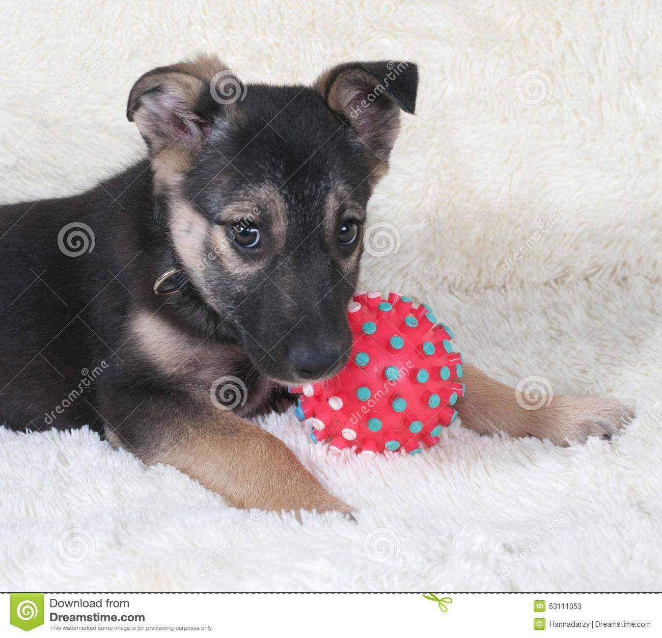 Small Black And Yellow Puppy Lying Next To Ball On Fur Sofa Stock For Small Black Sofas (Image 11 of 20)