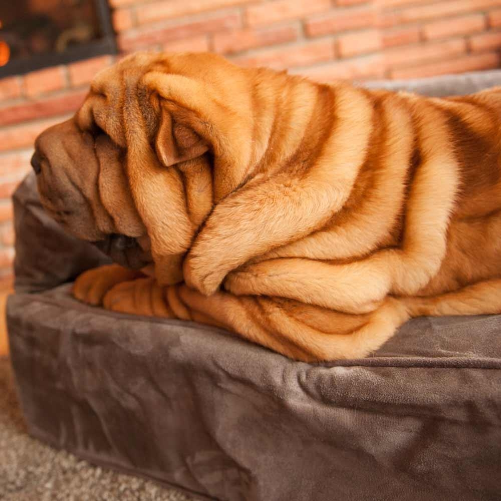 Snoozer Luxury Dog Sofa | Dog Couch | Microsuede Fabric With Regard To Snoozer Luxury Dog Sofas (View 9 of 20)