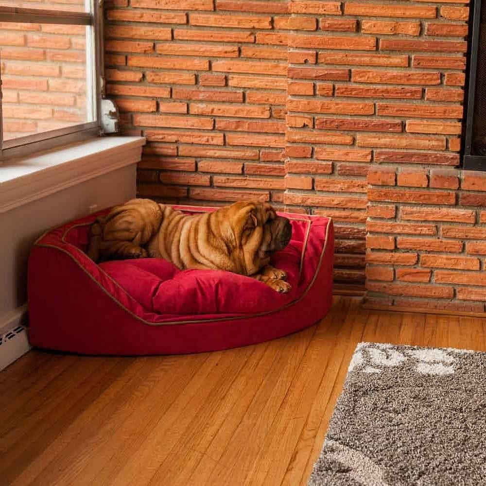 Snoozer Luxury Dog Sofa With Design Ideas 32523 | Kengire Throughout Snoozer Luxury Dog Sofas (View 7 of 20)