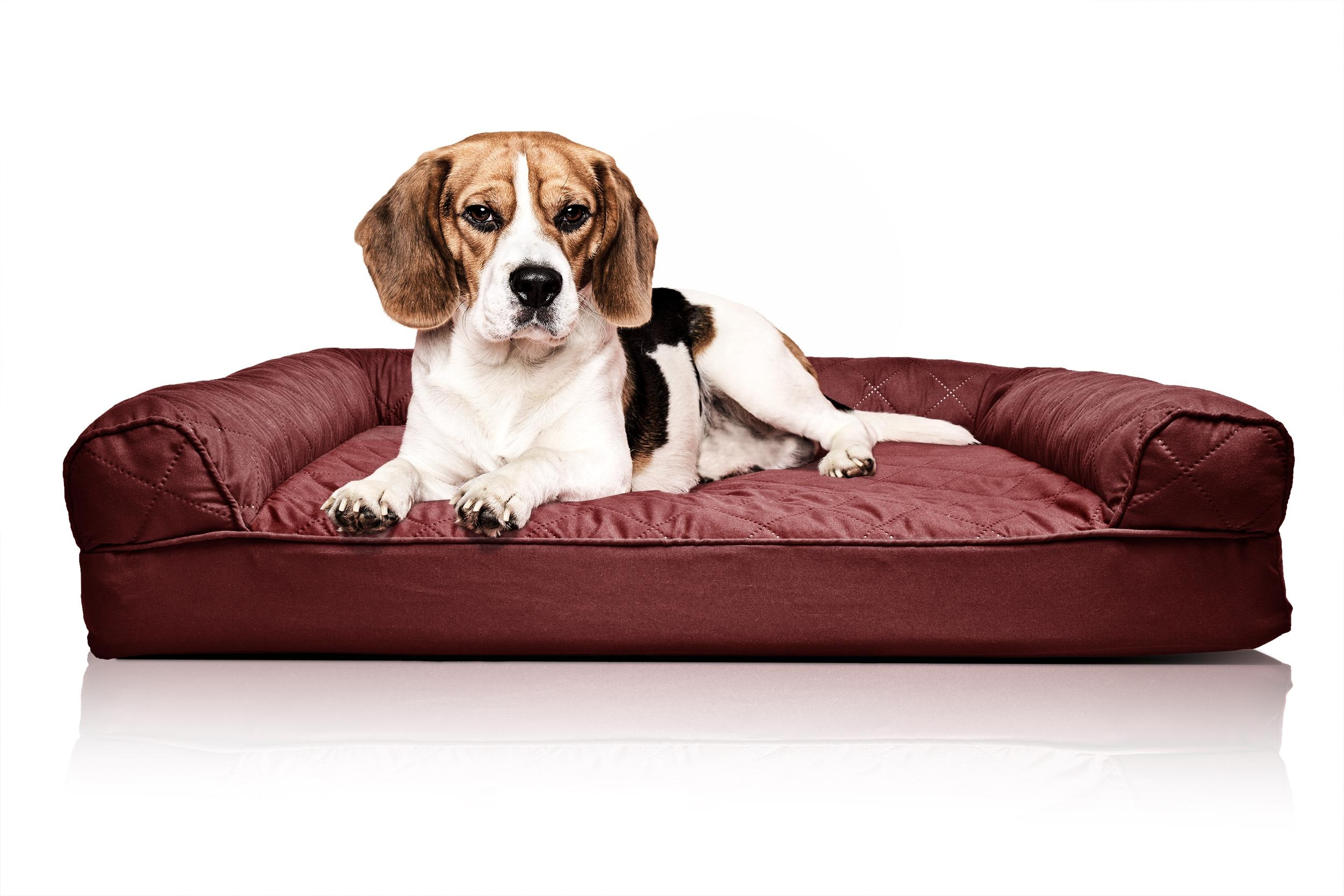 Sofas Center : Hot Dog Sofa Pet Bedluxury Best Beds X Bolster With Regard To Snoozer Luxury Dog Sofas (Image 17 of 20)