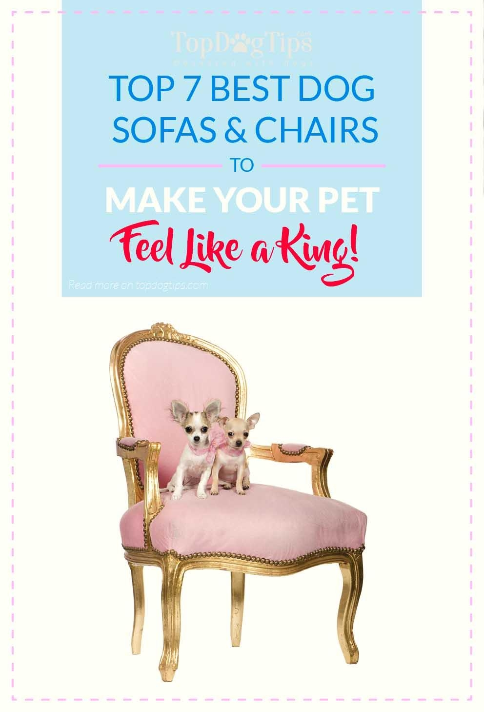 Top 7 Best Dog Sofas And Chairs For Stylish Home Decor In 2017 Pertaining To Dog Sofas And Chairs (View 10 of 20)