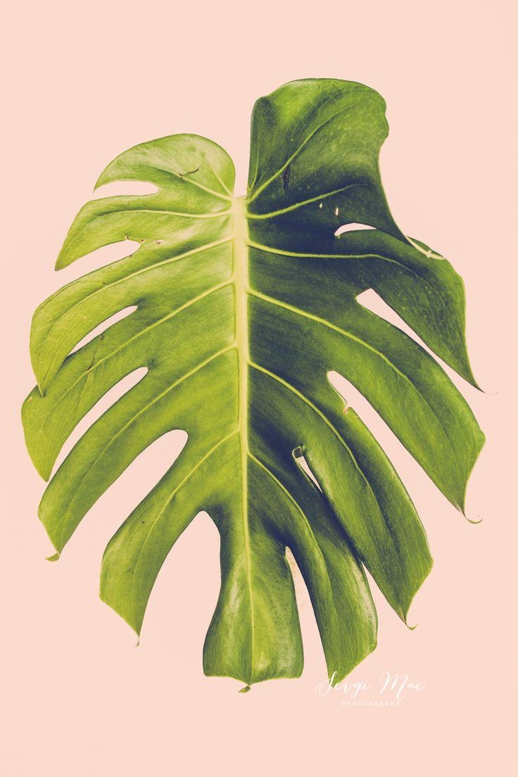 10 Best Wall Art Images On Pinterest   Printable Art, Tropical Within Palm Leaf Wall Decor (Image 1 of 20)