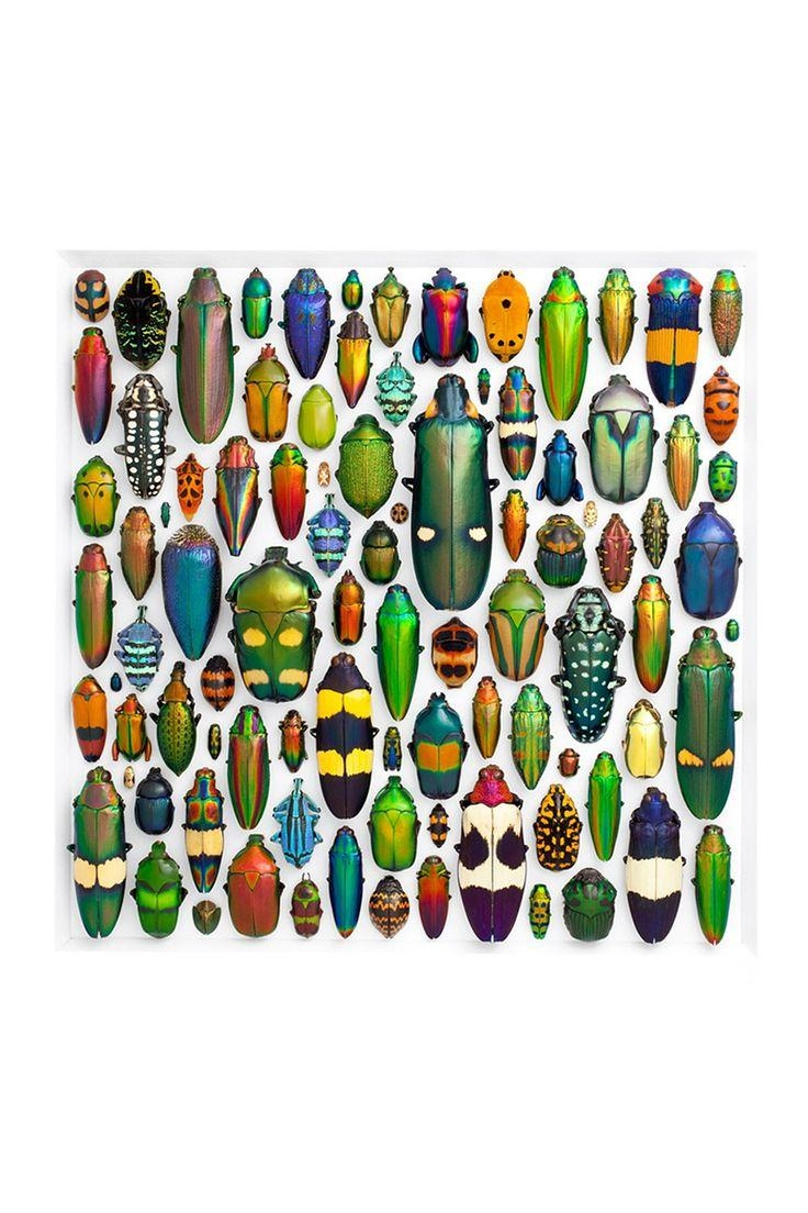 118 Best Insects Images On Pinterest | Insects, Animals And throughout Insect Wall Art