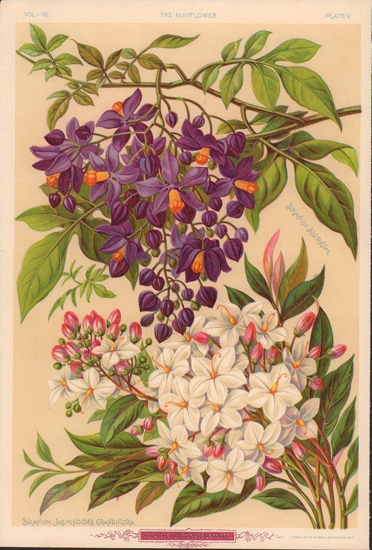 127 Best Antique Botanical Prints Images On Pinterest | Botanical For Botanical Prints Etsy (Image 2 of 20)