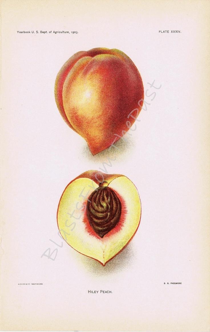17 Best Culinary Art Images On Pinterest | Botanical Illustration In Botanical Prints Etsy (Image 3 of 20)