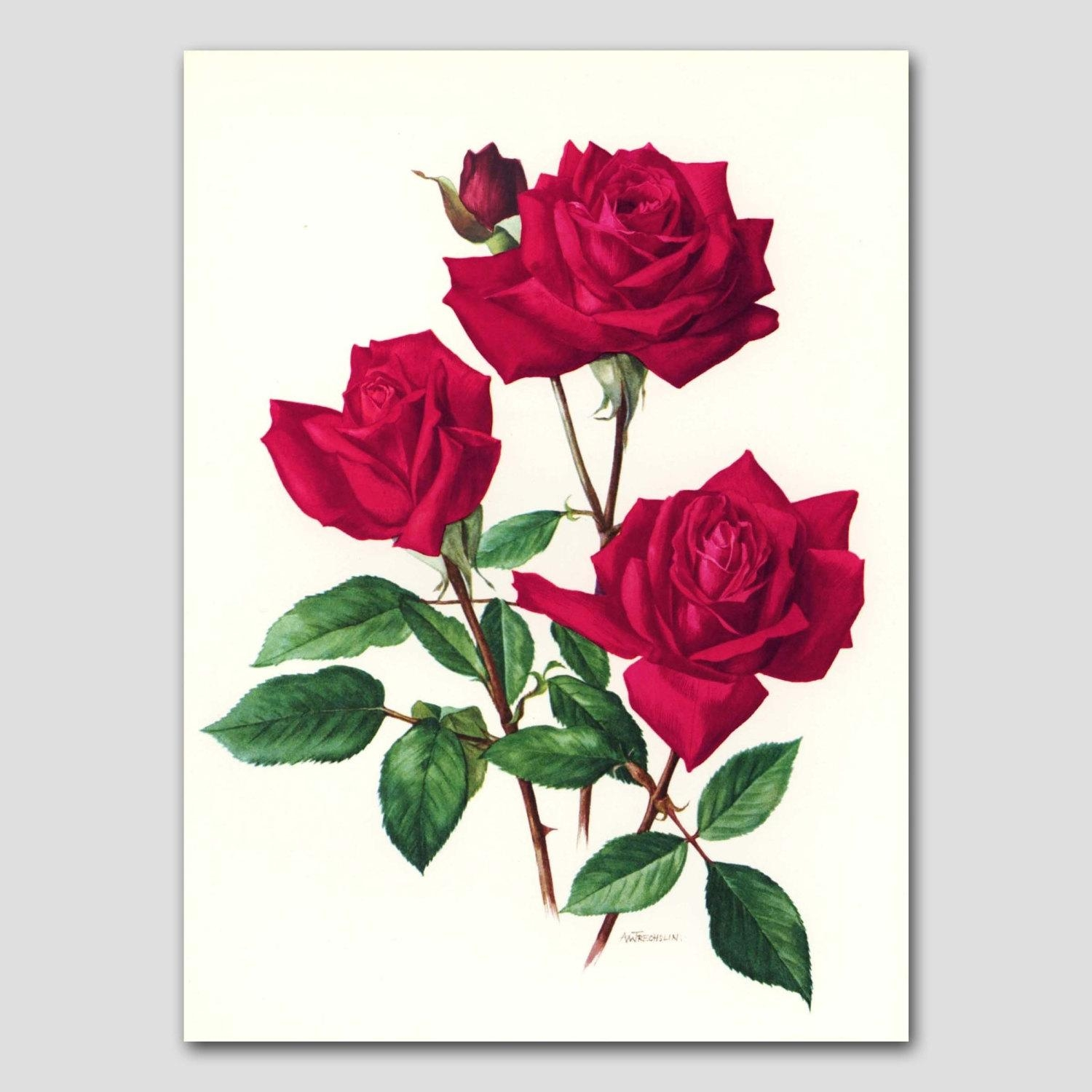 1960S Christian Dior Red Rose Art Vintage Paris With Regard To Red Rose Wall Art (Image 1 of 20)