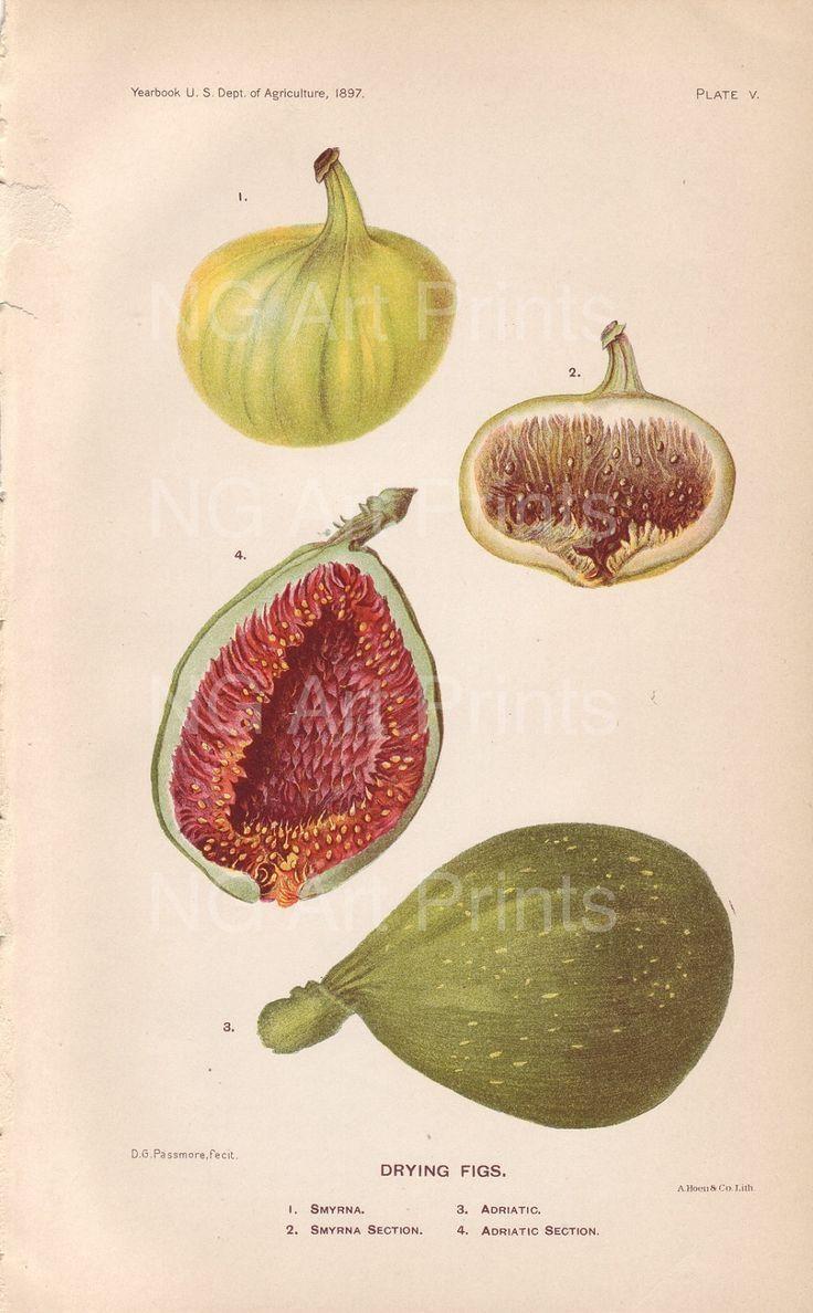 33 Best Botanical Ideas Images On Pinterest | Botanical Inside Botanical Prints Etsy (Image 8 of 20)