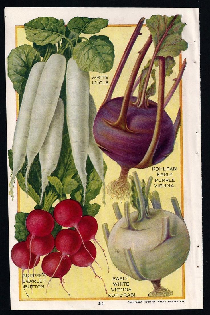 366 Best Old Print Botanical 2 Images On Pinterest | Botanical Regarding Botanical Prints Etsy (Image 9 of 20)