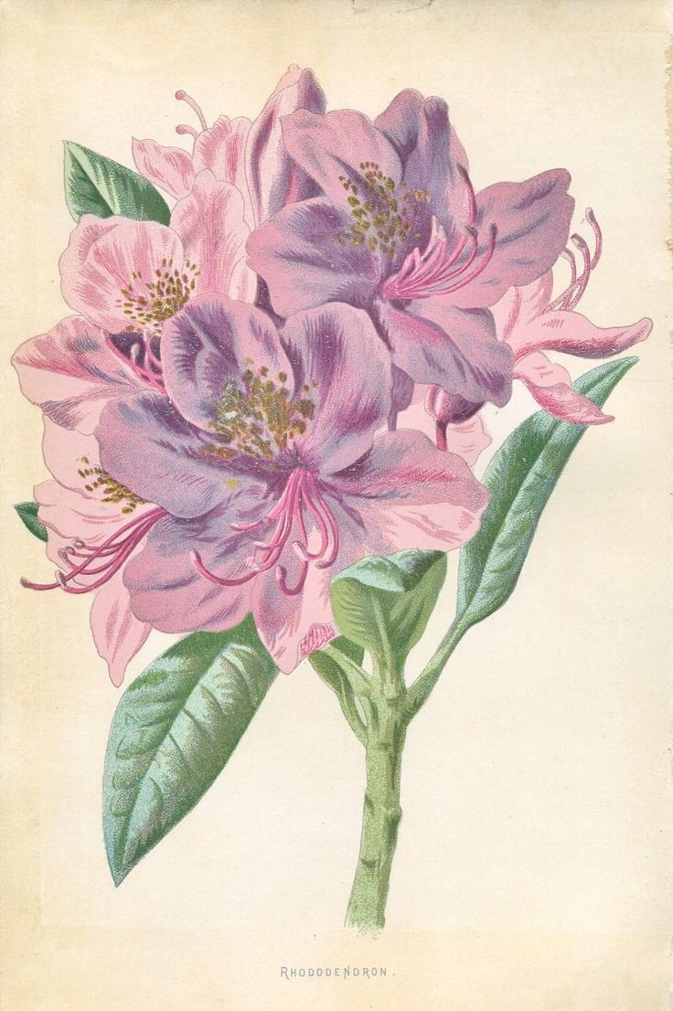 61 Best Old Posy Prints Images On Pinterest | Botanical Prints Regarding Botanical Prints Etsy (Image 11 of 20)