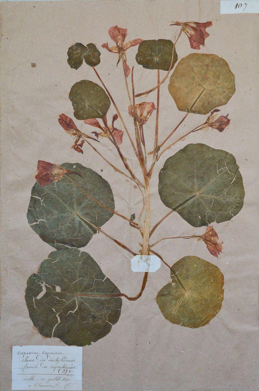 95 Best El Herbario Images On Pinterest | Botanical Prints, Botany within Botanical Prints Etsy