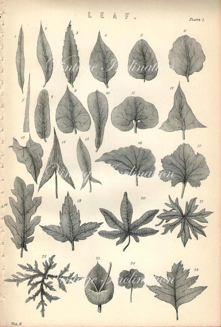 98 Best Botanical Prints (Image 13 of 20)
