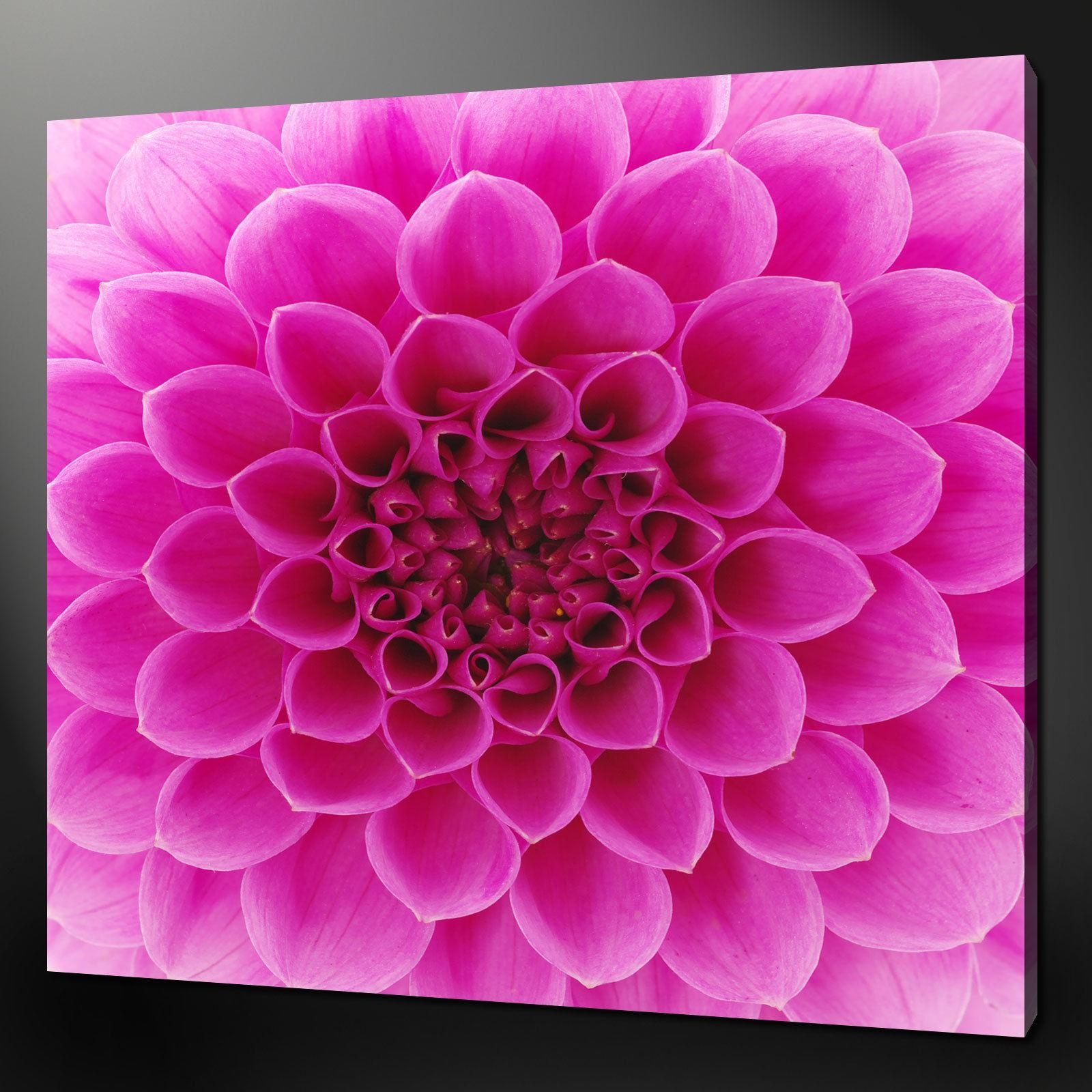 "Abstract Pink Dahlia Flower Modern Wall Art Canvas Print 12""x12 Intended For Pink Flower Wall Art (Image 2 of 20)"