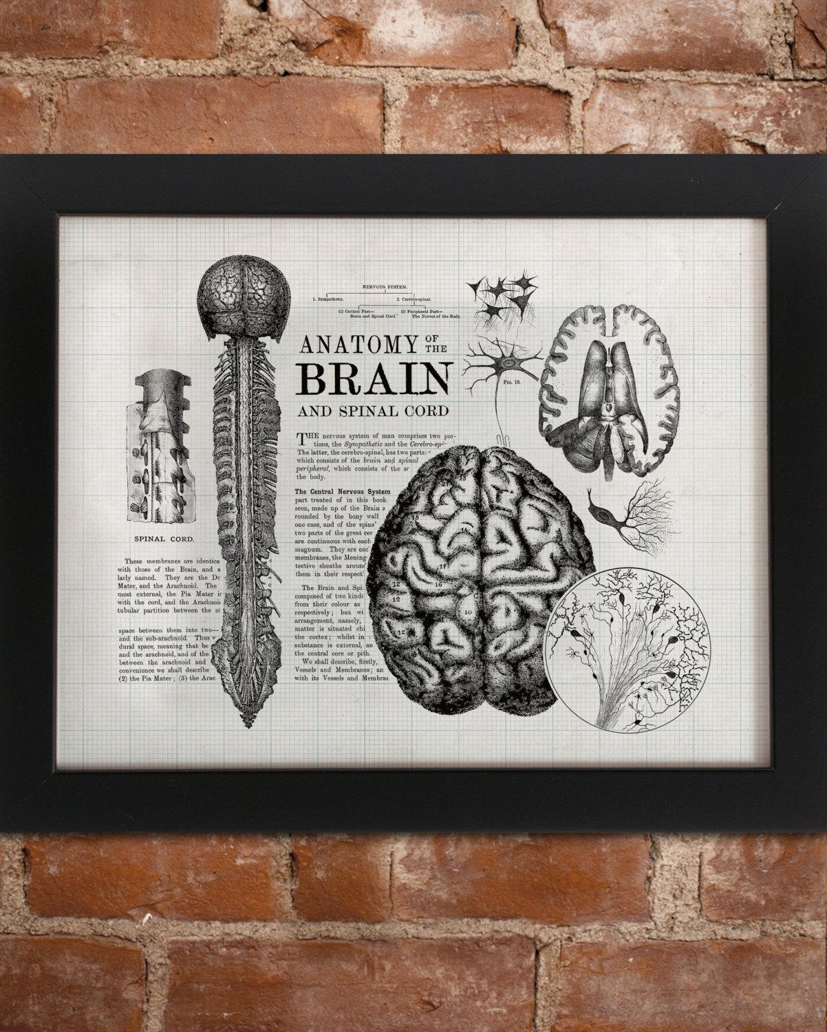 Anatomical Brain Vintage Art Print Neuron Nurse Neuroscience Regarding Medical Wall Art (Image 1 of 20)