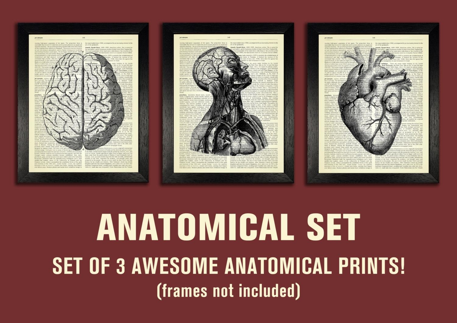 Anatomical Set Anatomy Print Set Medical Wall Art For Medical Wall Art (Image 2 of 20)
