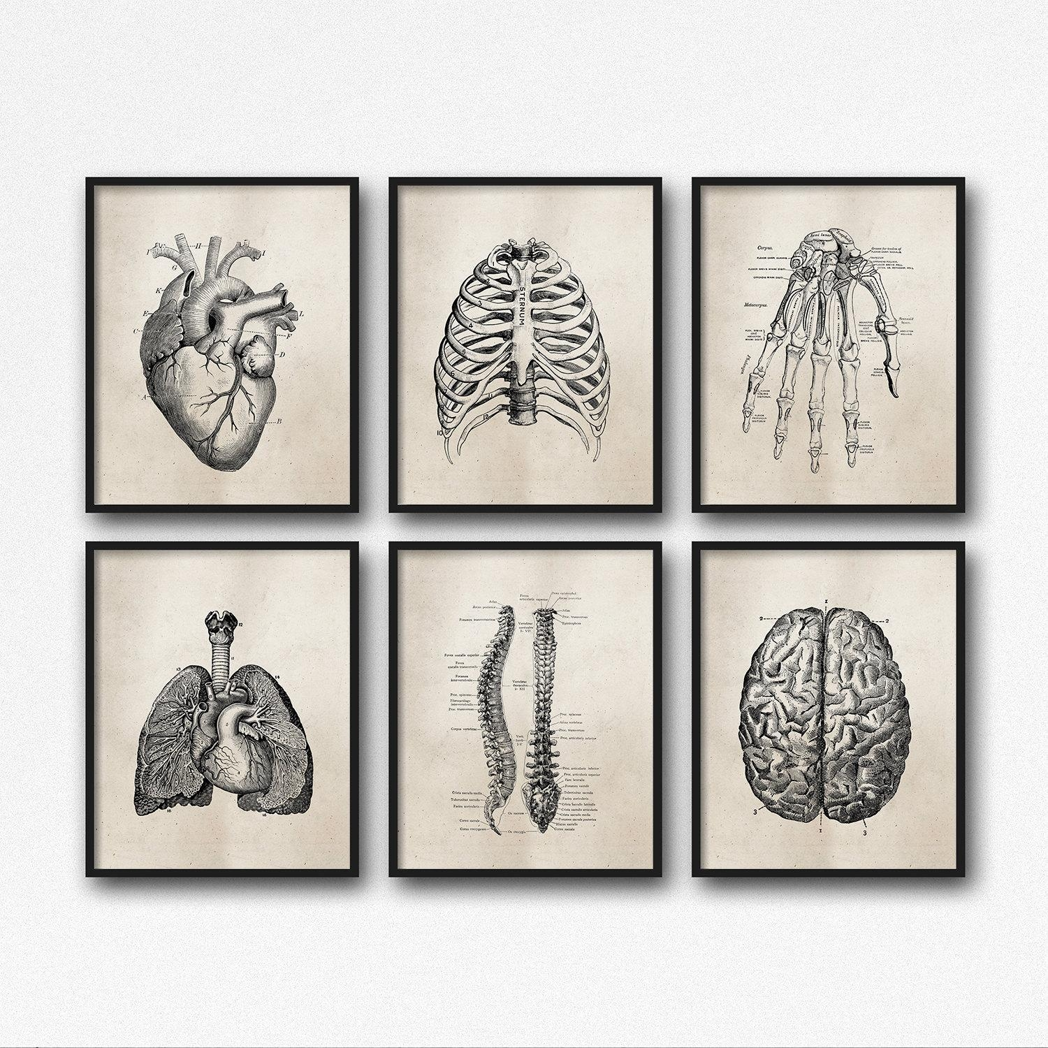 Anatomy Art Prints Office Art Medical Student Graduation With Medical Wall Art (Image 3 of 20)