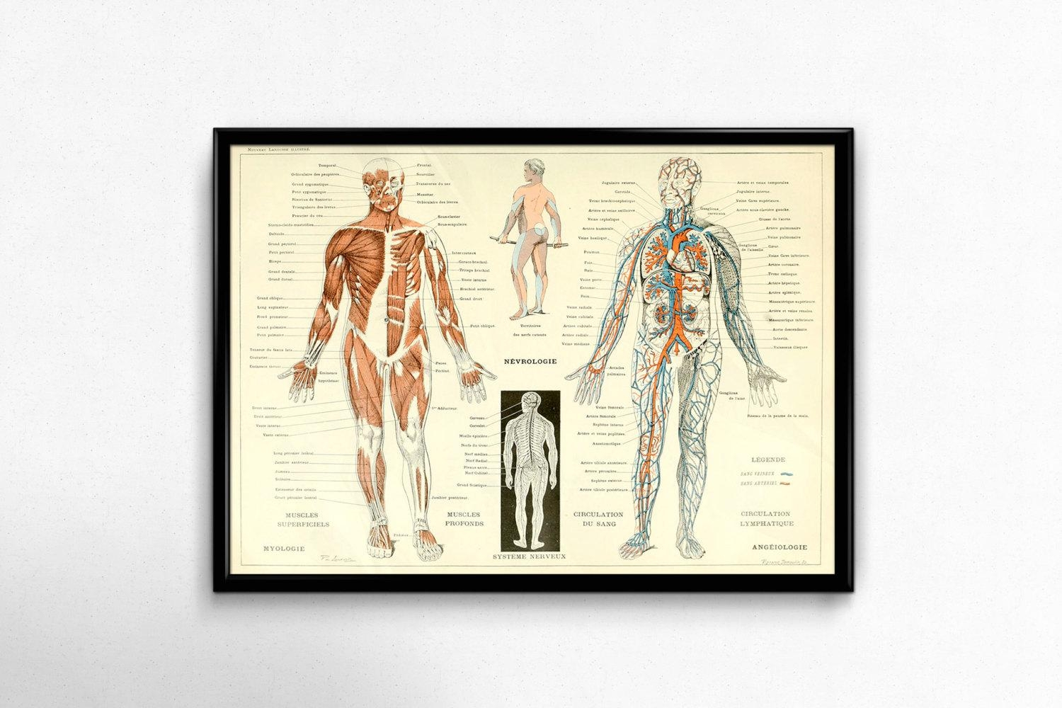 Antique Anatomy Print 1800S Vintage Human Body Poster Science Regarding Medical Wall Art (View 15 of 20)