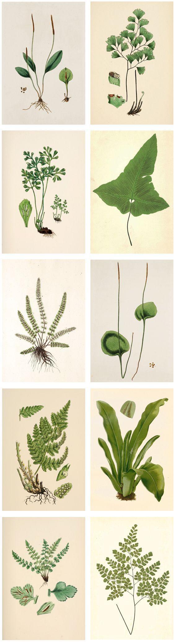 Best 25+ Plant Art Ideas On Pinterest | Kitchen Plants, Window Inside Floral & Plant Wall Art (Photo 4 of 20)