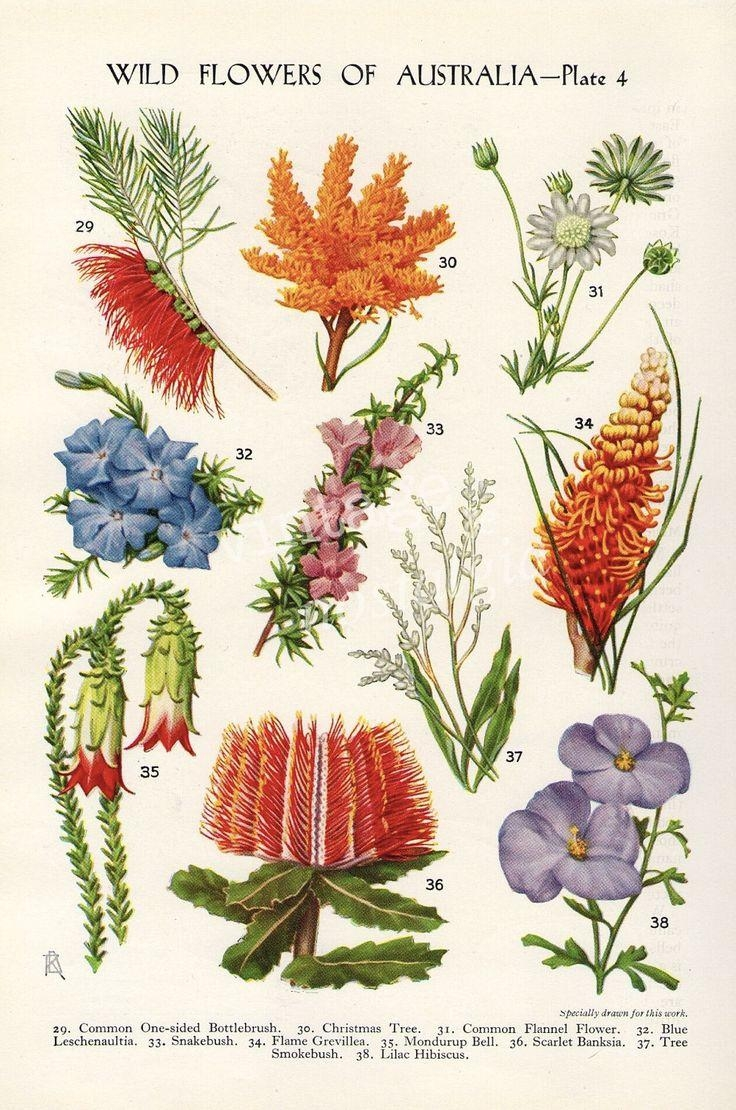 Best 25+ Vintage Flower Prints Ideas On Pinterest | Vintage Prints Pertaining To Botanical Prints Etsy (Image 15 of 20)