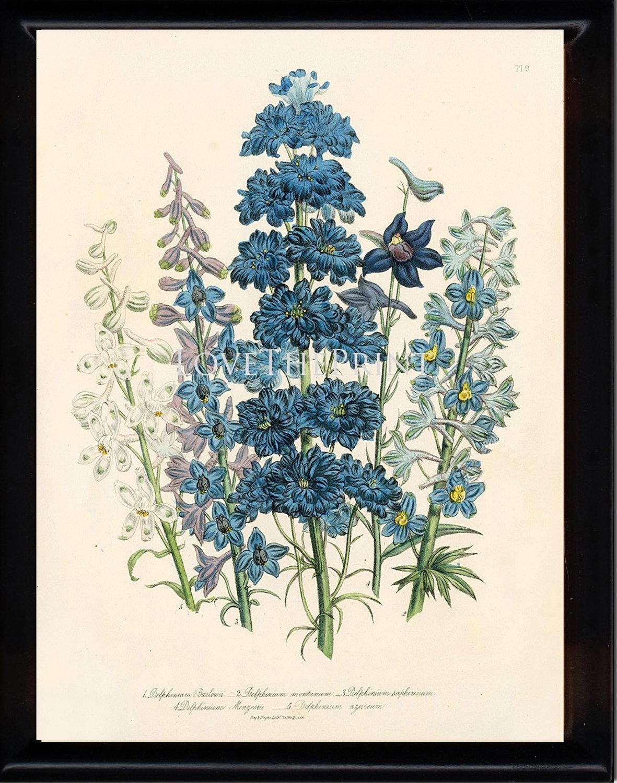 Botanical Print Loudon Flower Botanical Art Print 61 Regarding Botanical Prints Etsy (Image 16 of 20)