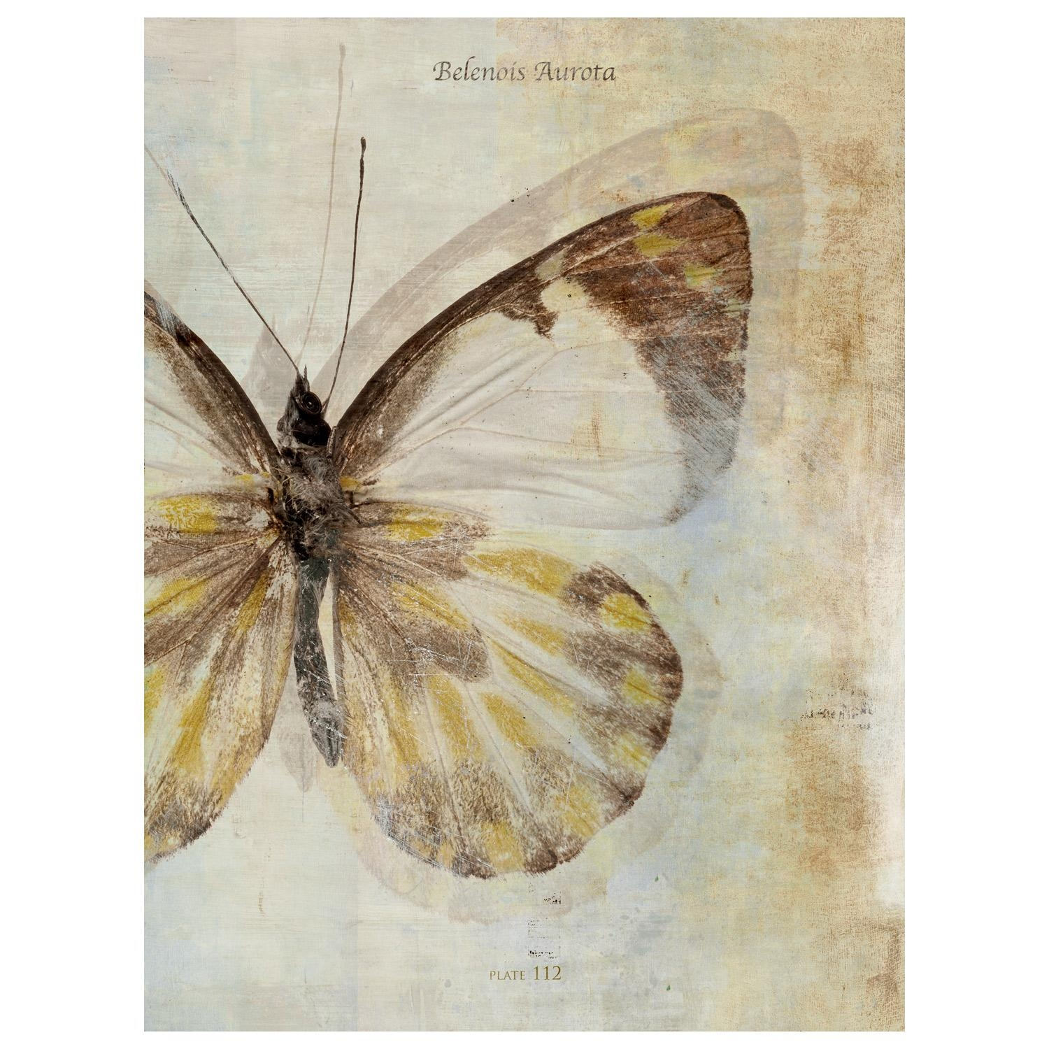 Butterfly Effect Ii Canvas Wall Art Pertaining To Butterfly Canvas Wall Art (Image 5 of 20)
