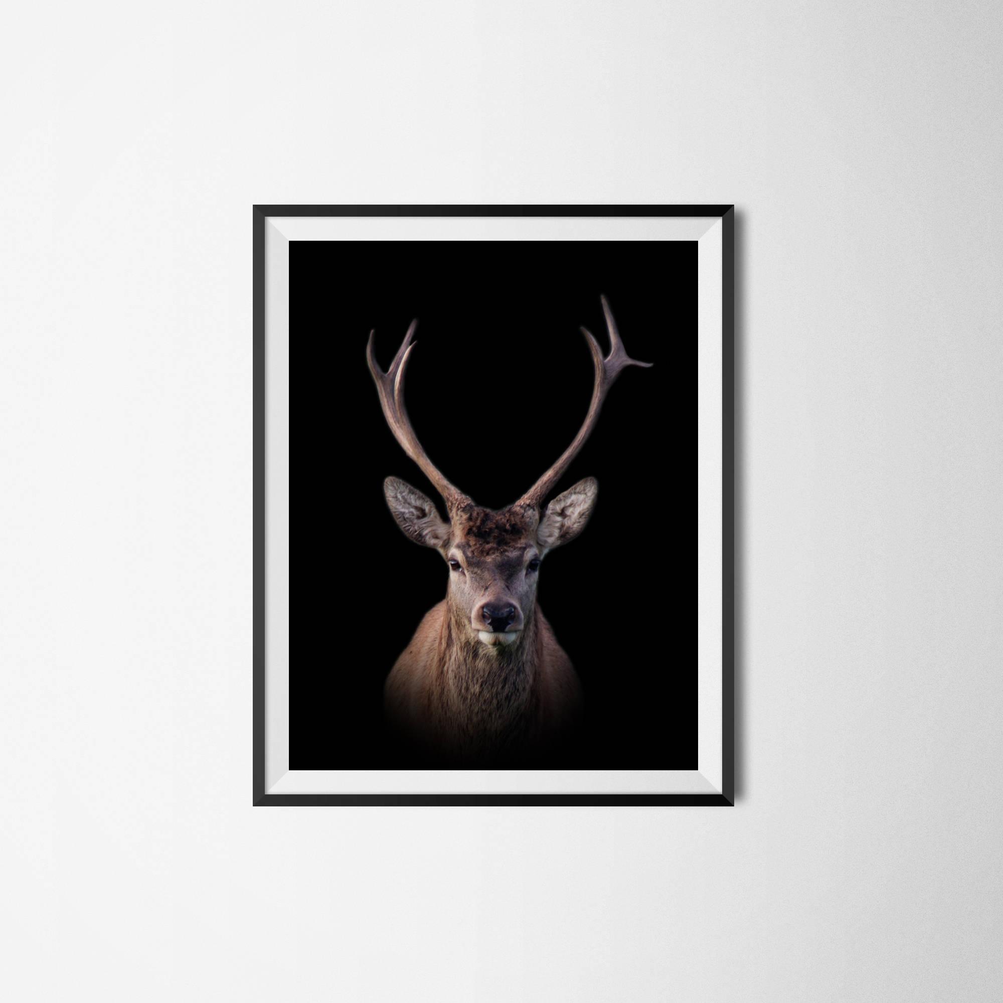 Deer Print, Deer Wall Art, Animal Print, Stag Print, Deer Head In Stag Wall Art (Image 8 of 20)