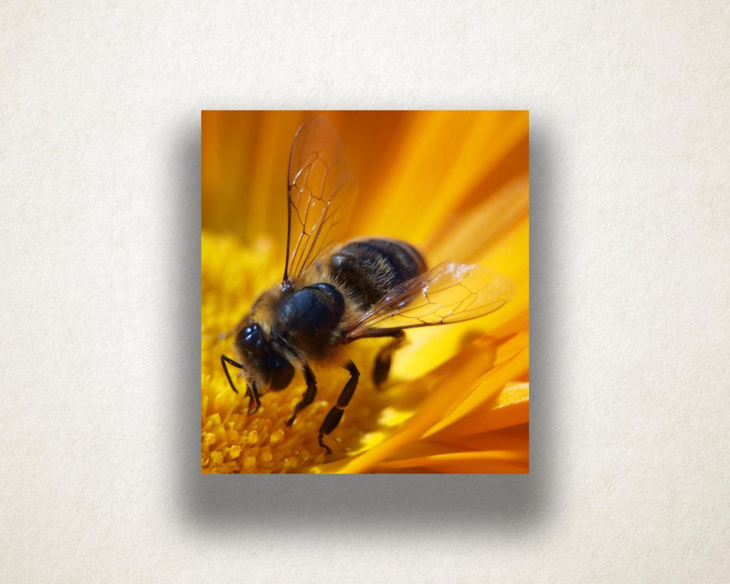 Flower And Bee Canvas Art, Bee Close Up Wall Art, Insect Canvas For Insect Wall Art (Image 5 of 20)