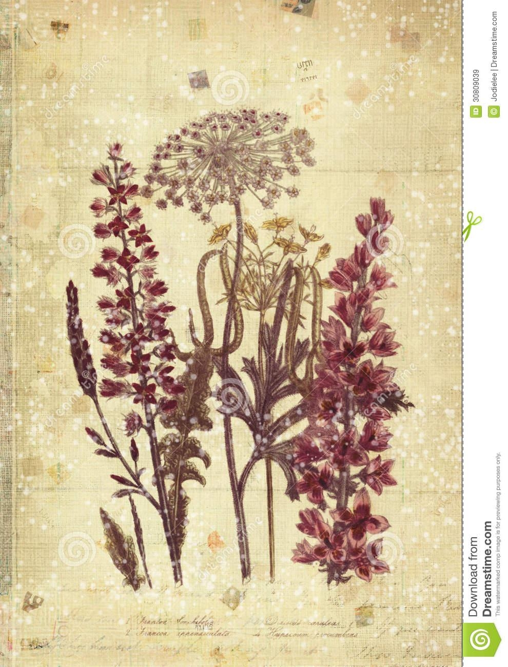 Flowers Botanical Vintage Style Wall Art With Textured Background For Vintage Style Wall Art (View 7 of 20)