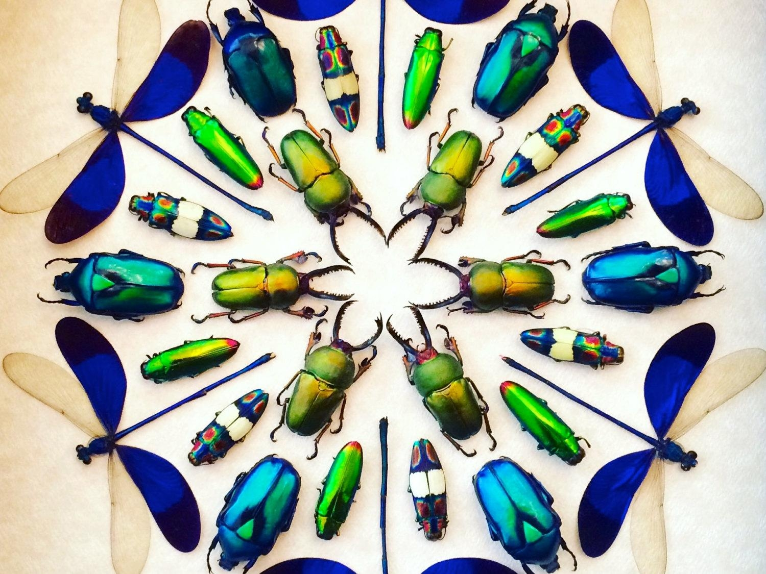 Framed Insect Display Kaleidoscope Real Bugs Framed Beetle Art For Insect Wall Art (Image 6 of 20)