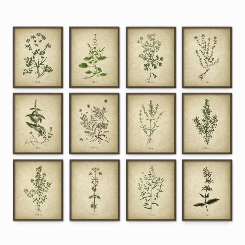 Kitchen Herbs Wall Art Print Set Of 12 Vintage Botanical In Wall Art For Kitchens (View 20 of 20)