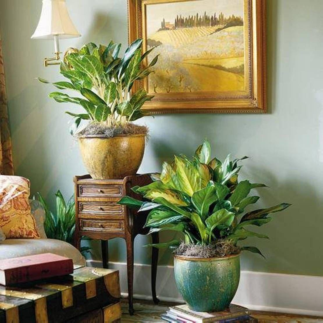 Living Room With Framed Wall Art And Chinese Evergeen Houseplants Intended For Exotic Wall Art (Image 17 of 20)