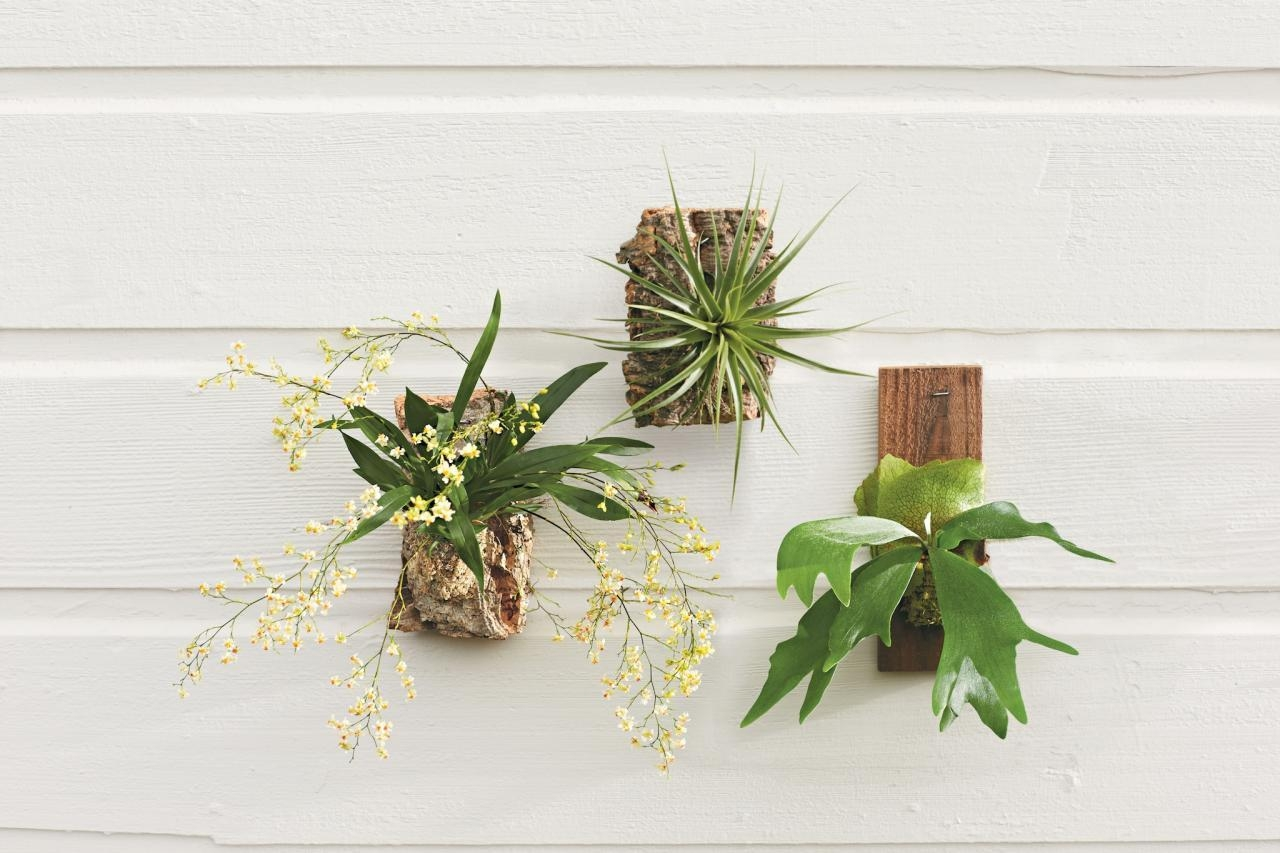 Living Walls Bring Container Gardening Indoors | Hgtv Intended For Floral & Plant Wall Art (Image 11 of 20)