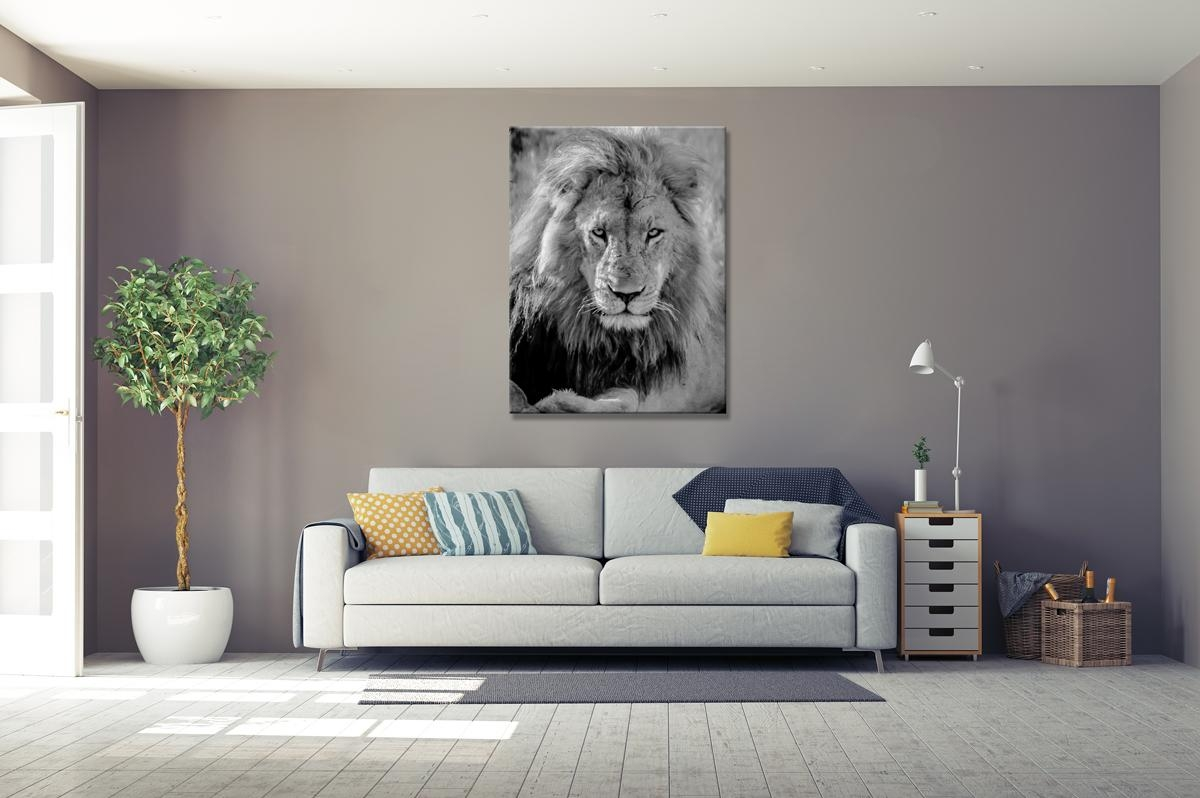 Lord Of The Lions – Rogue Aurora Photography Pertaining To Lion Wall Art (View 8 of 20)