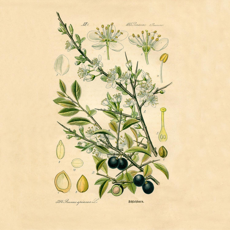 Wall Art Ideas: Botanical Prints Etsy (Explore #19 of 20 Photos)