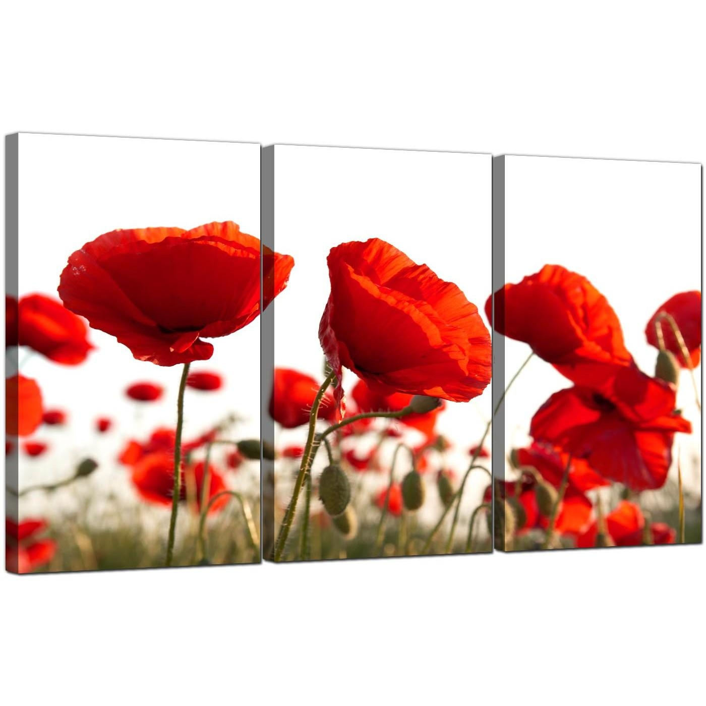Poppy Canvas Wall Art Set Of 3 For Your Living Room Inside Red Poppy Canvas Wall Art (Image 13 of 20)