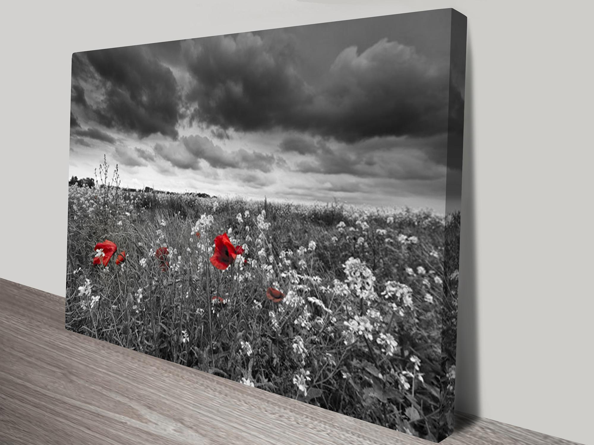 Red Poppy Field Black And White Canvas Art Pertaining To Black And White Wall Art With Red (View 3 of 20)