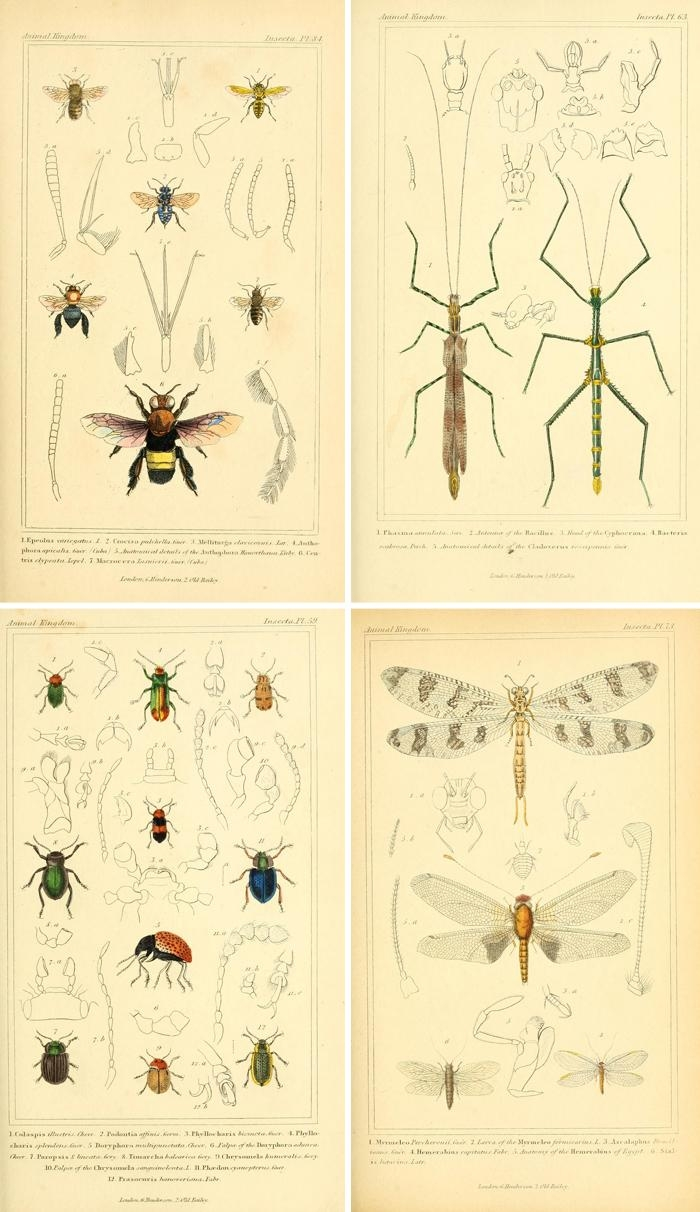 Remodelaholic | 25+ Free Incredible Insects Vintage Printable Images with Insect Wall Art
