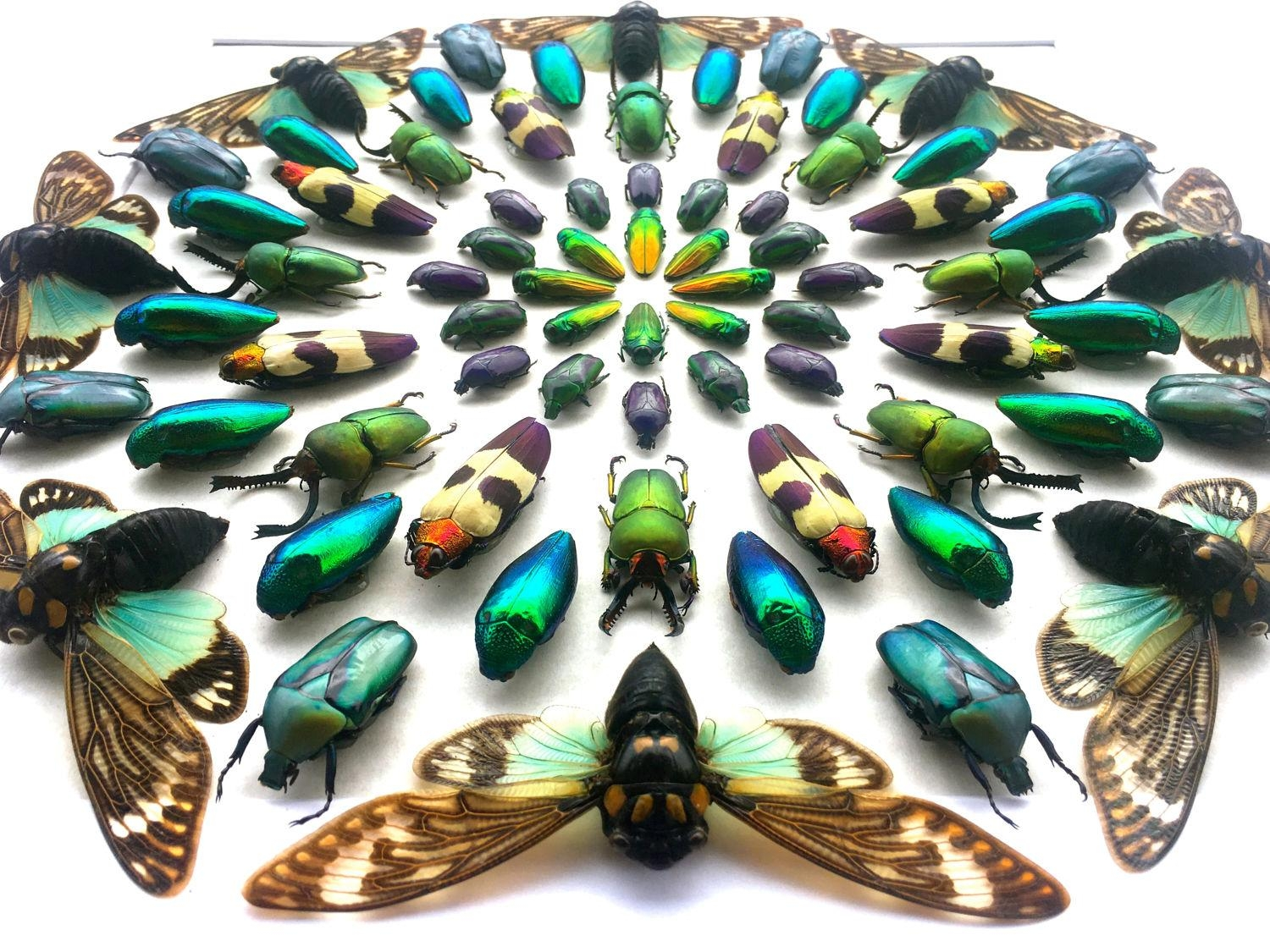 Shadow Box Art Real Taxidermy 3D Wall Art Large Artwork Cool With Insect Wall Art (Image 17 of 20)