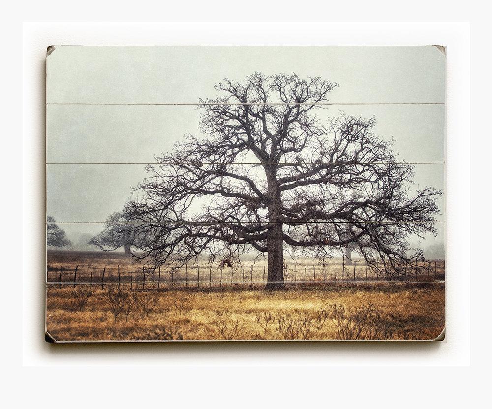 The Oak Tree Wood Plank • Lisa Russo Fine Art Photography Inside Oak Tree Wall Art (View 7 of 20)