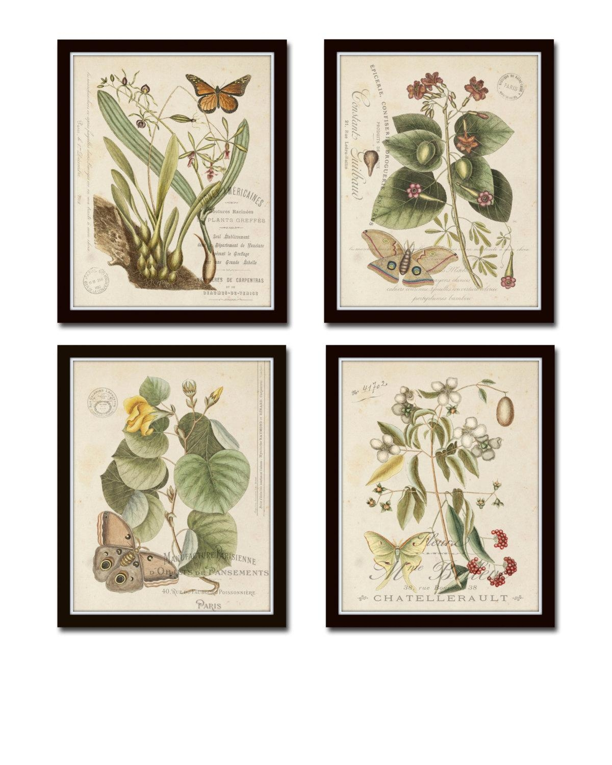 Vintage Butterfly And Botanical Print Set No (Image 20 of 20)