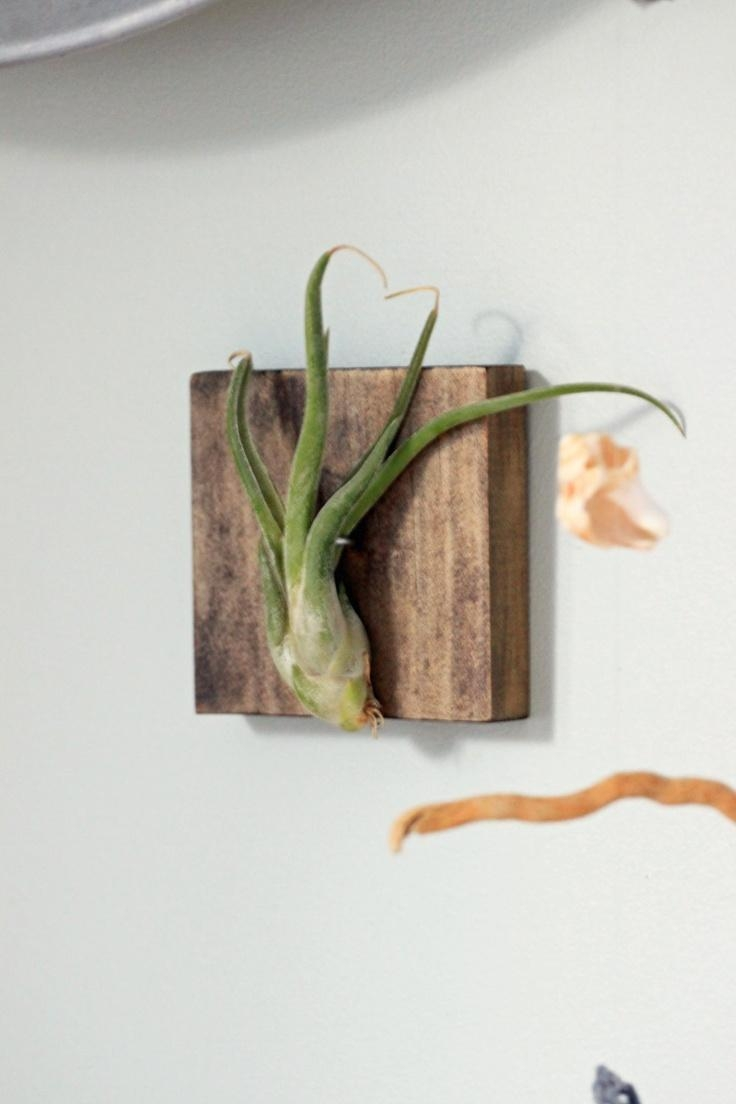 107 Best My Air Plants Collections Images On Pinterest | Air With Air Plant Wall Art (Image 1 of 20)